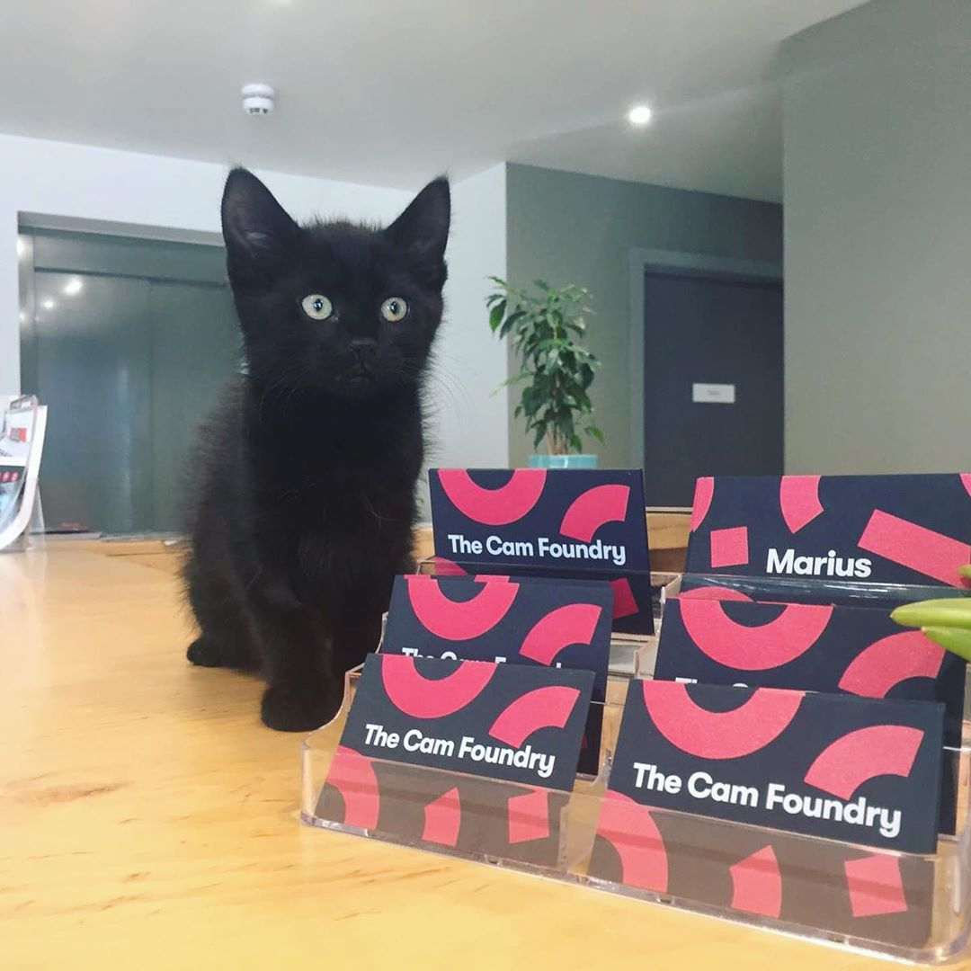 Say hello to the two newest residents of The Cam Foundry. Mark and Jack have joined us as our house pets, they're still too little (😩😍) to be allowed to roam around freely so they're staying near the front desk for now. Come and say hi!  #apartofcambridge #housepet #kittensofinstagram #catsofinstagram #studentliving