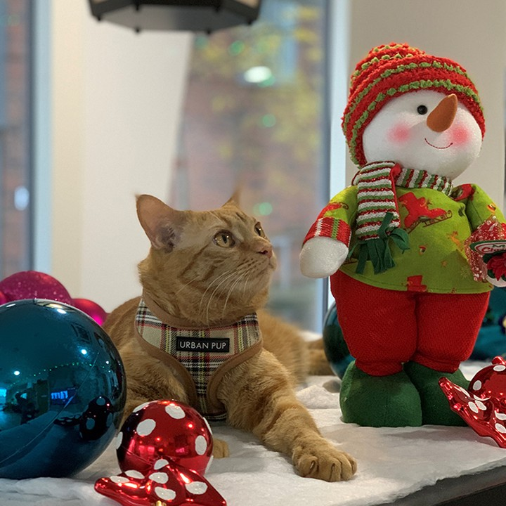 🎅 Can you believe it's only 2 weeks till Christmas?! – Sebastian at Binary Hub is day dreaming about all the treats he'll get 😍 #apartofbinaryhub