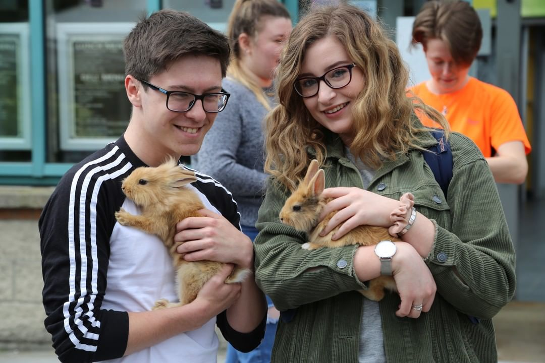 🐩Come and meet some fluffy friends today at Beckett House from 4-6pm. Take a break to relax with the petting farm animals in their special visit to our residence! #apartofbecketthouse #apartofdublin