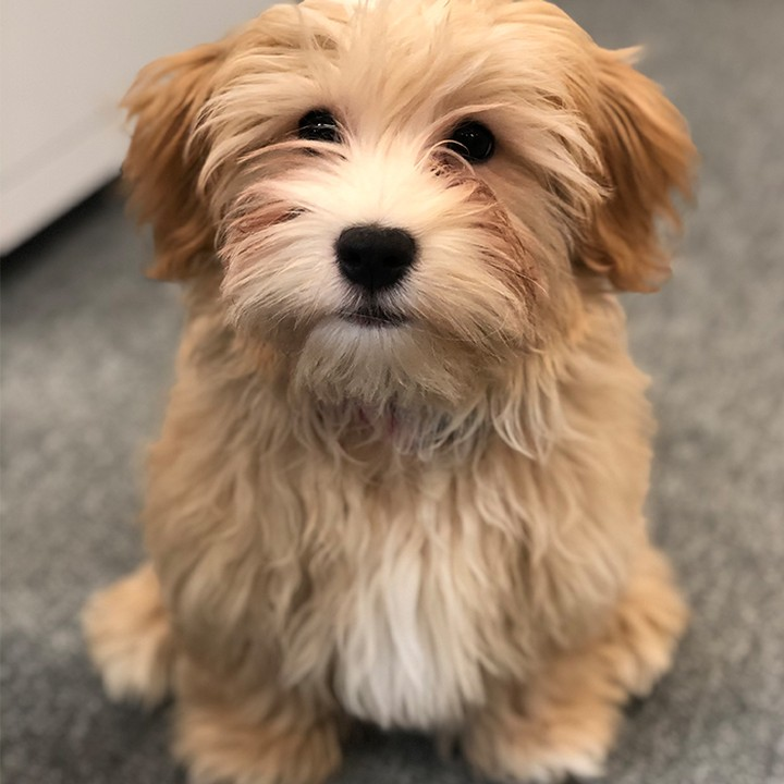 aparto pup Willowby wants to wish you all a Happy Friday! Sending you all positive vibes. Look at that little face 😍 🐶#apartofyourstory #studentliving